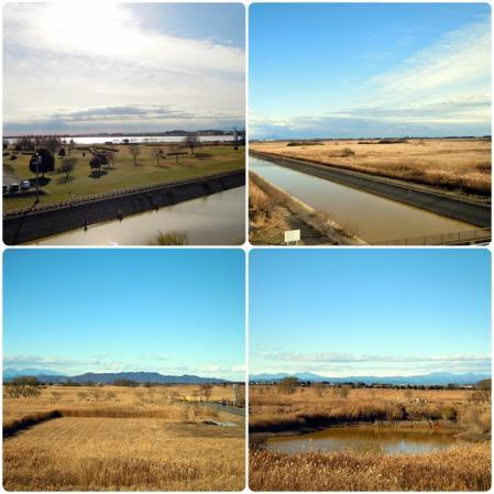 谷中湖と権現堂公園6