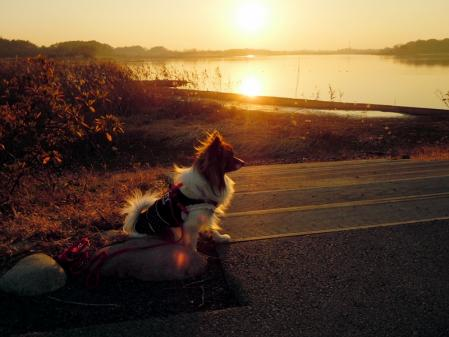 夕陽の小径で・・・8
