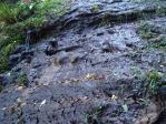 お湿りの滝?