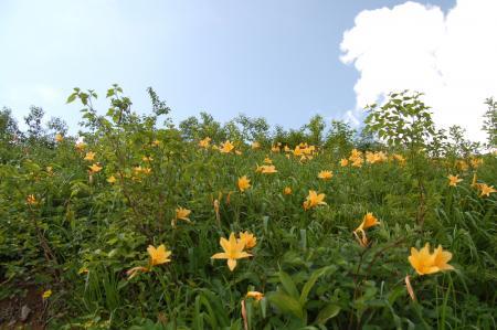 45お花畑