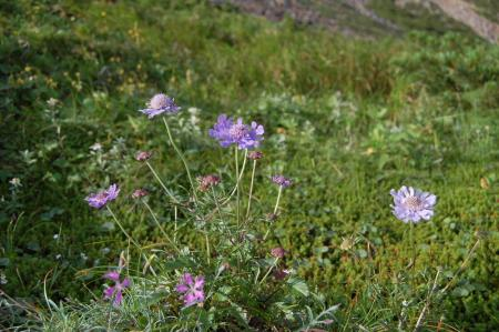 79雪倉岳へ・花