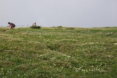 114お花畑