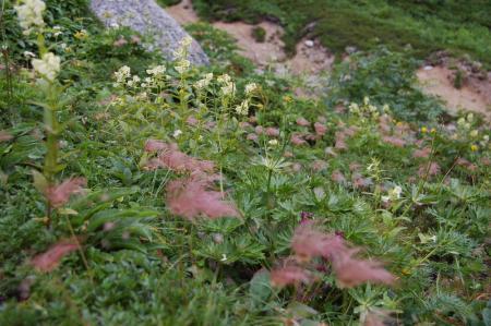 111燕岳へ・お花畑