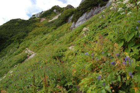 121北燕岳稜線・お花畑
