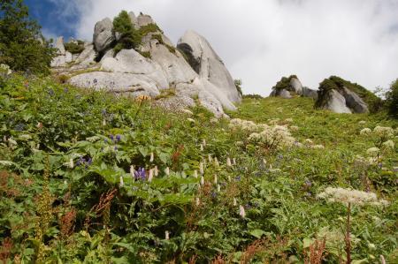122北燕岳稜線・お花畑