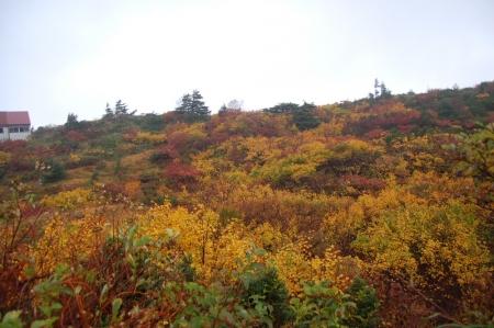 3登山口付近の紅葉