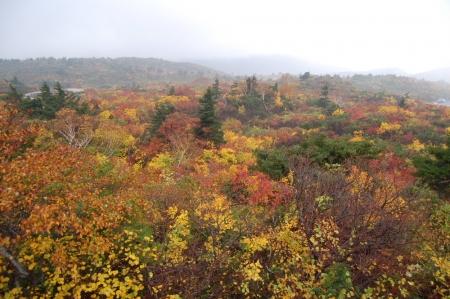5登山口付近の紅葉
