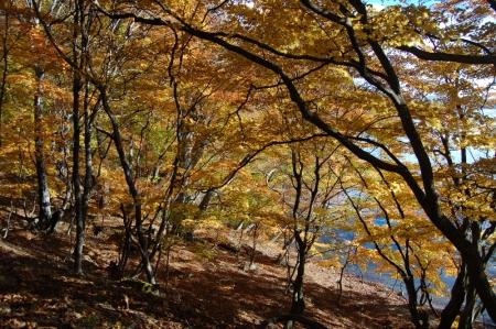 16上野島付近