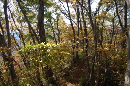 4中武生山付近の紅葉