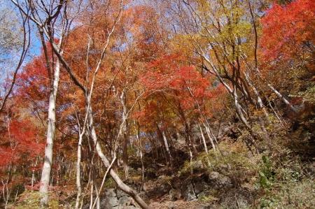 6笹原側のモミジ谷