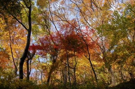 15尾根の紅葉