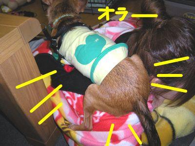 snap_yamatoss_20091112338.jpg
