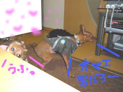 snap_yamatoss_2009112114330.jpg