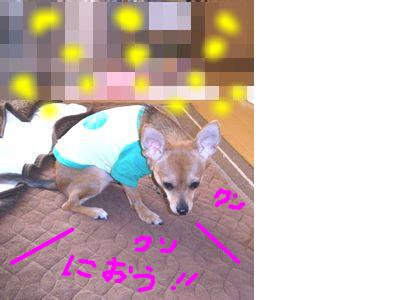 snap_yamatoss_2009122212110.jpg