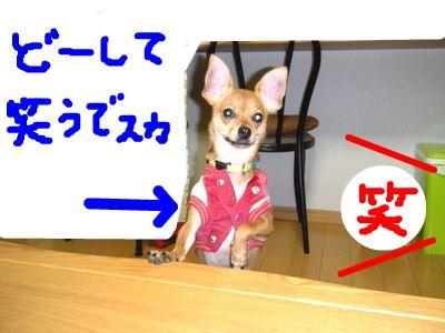 snap_yamatoss_2009123235012.jpg
