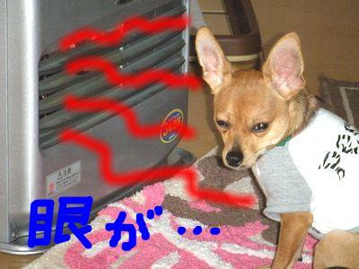 snap_yamatoss_2009124181129.jpg