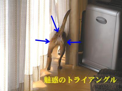 snap_yamatoss_2009126142741.jpg
