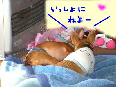 snap_yamatoss_201011222022.jpg