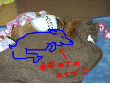snap_yamatoss_201011224526.jpg