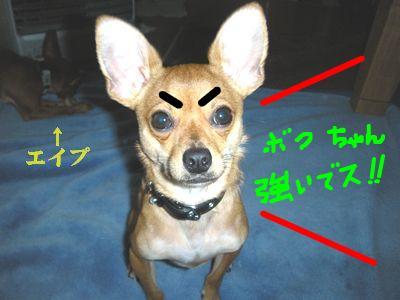 snap_yamatoss_20102121046.jpg