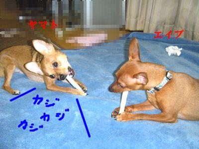 snap_yamatoss_201031232235.jpg