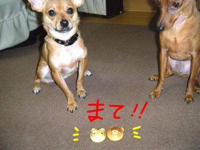 snap_yamatoss_201046225944.jpg