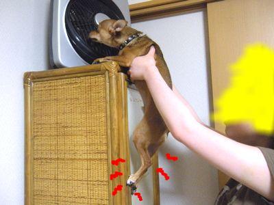 snap_yamatoss_201052211230.jpg