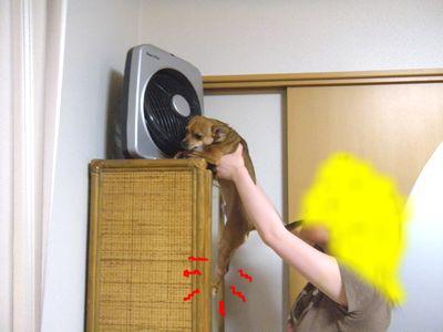 snap_yamatoss_20105221840.jpg