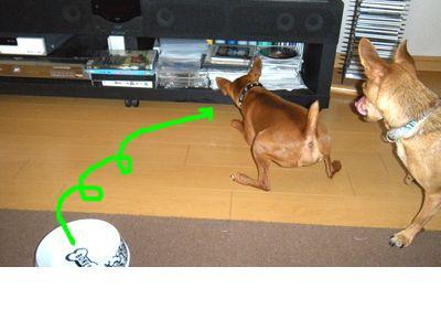 snap_yamatoss_20106021580.jpg