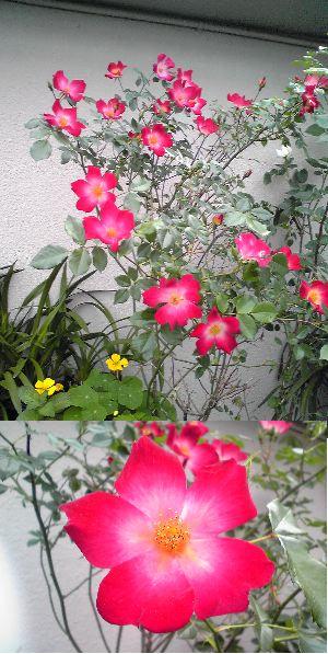 6.8ピアノ花1