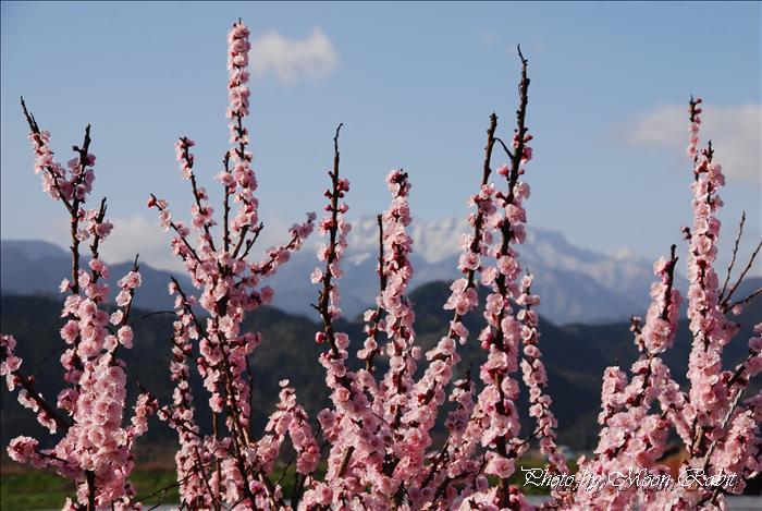 禎祥寺横の加茂川土手から見た石鎚山 愛媛県西条市上神拝 2009年3月15日