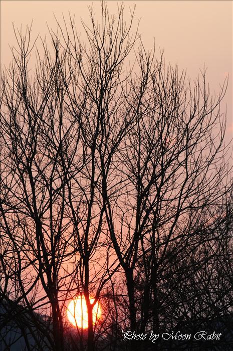 今治市のスポット・名所 湯ノ浦温泉・桜井総合公園近くの落日 愛媛県今治市湯ノ浦 2009年4月6日