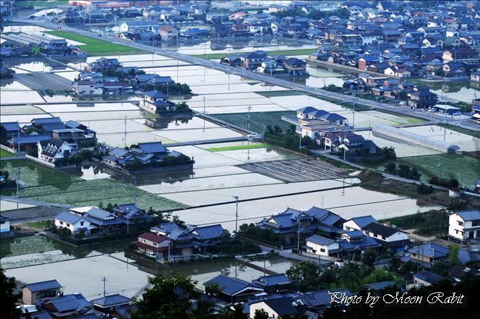 西条市の水田 西条市市民の森より 愛媛県西条市福武 2009年6月16日