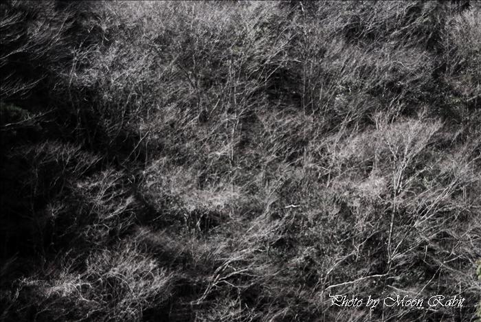 久万高原町の景色 面河ダム公園付近の木立・八社(はっしゃ)神社 愛媛県上浮穴郡久万高原町大字笠方字市口 2010年3月22日