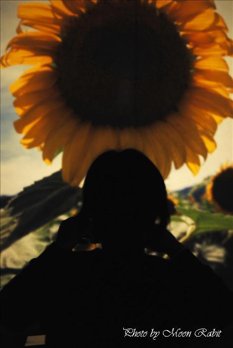 西条市中央公民館・東予体育館・西条市立東予郷土館・東予図書館 --写真は-- 西条市の風景など 西条市中央公民館にて 愛媛県西条市周布401-1  2010年5月12日
