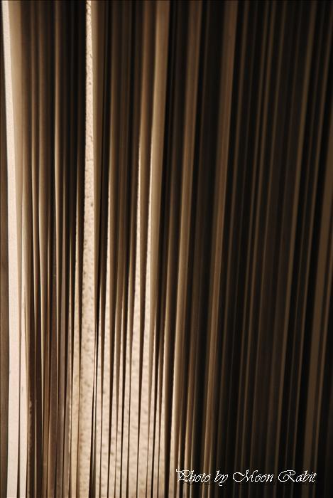 西条市中央公民館・東予体育館・西条市立東予郷土館・東予図書館 --写真は-- 西条市中央公民館でのスナップ 愛媛県西条市周布401-1 2010年6月9日
