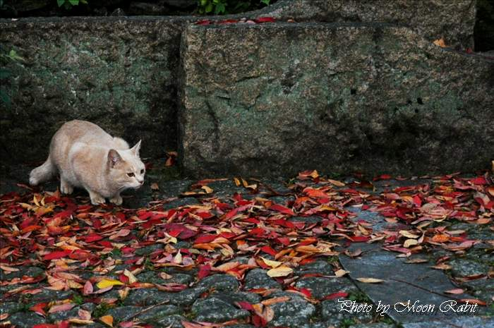 新居浜市の野良猫 広瀬公園のノラネコ(野良猫) 愛媛県新居浜市上原 2010年11月28日