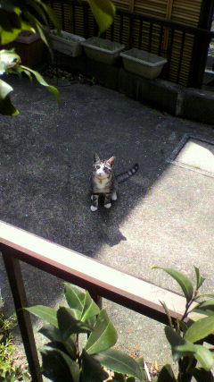 20100327猫