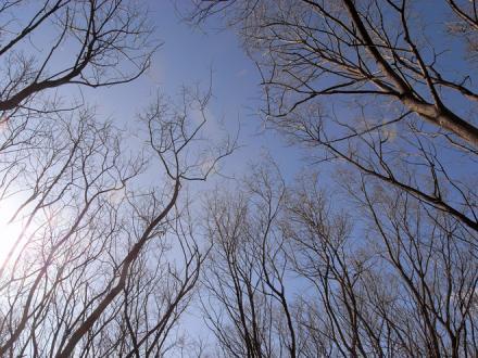 ヤナギ林と空
