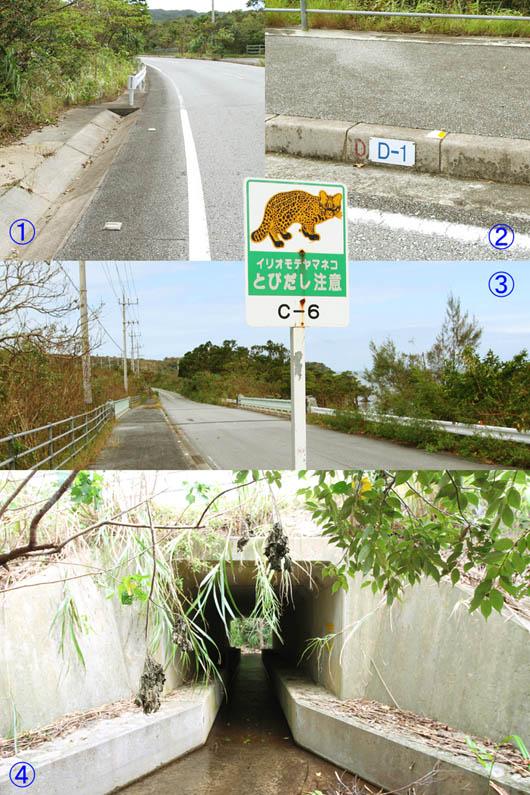 イリオモテヤマネコと道路の関係