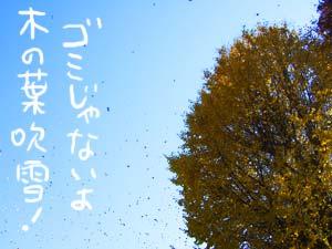木の葉吹雪