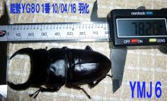 能勢YG801番78