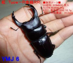 紅 Type-R