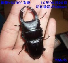 能勢YGおまけ♂68