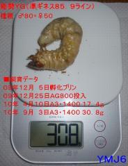能勢YG30.8g