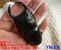 YG796 2