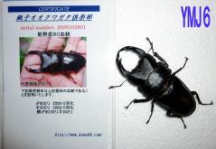 能勢YG♂80
