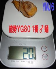 能勢YG 1番♂蛹