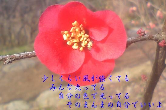 Cut2011_0130_1140_03.jpg