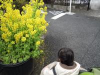 菜の花だぁ♪